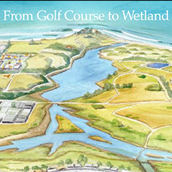 From Golf Course to Wetland