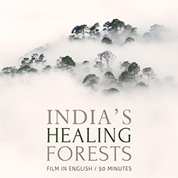 India's Healing Forest