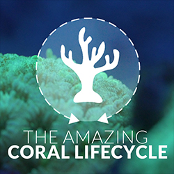 The Amazing Coral Lifecycle