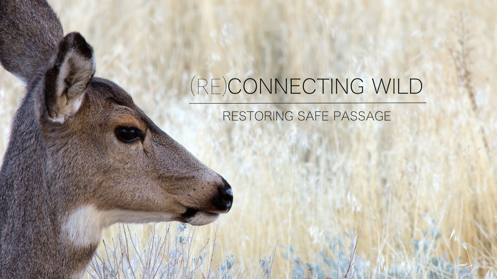 (Re)Connecting the Wild
