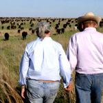 Herd Impact