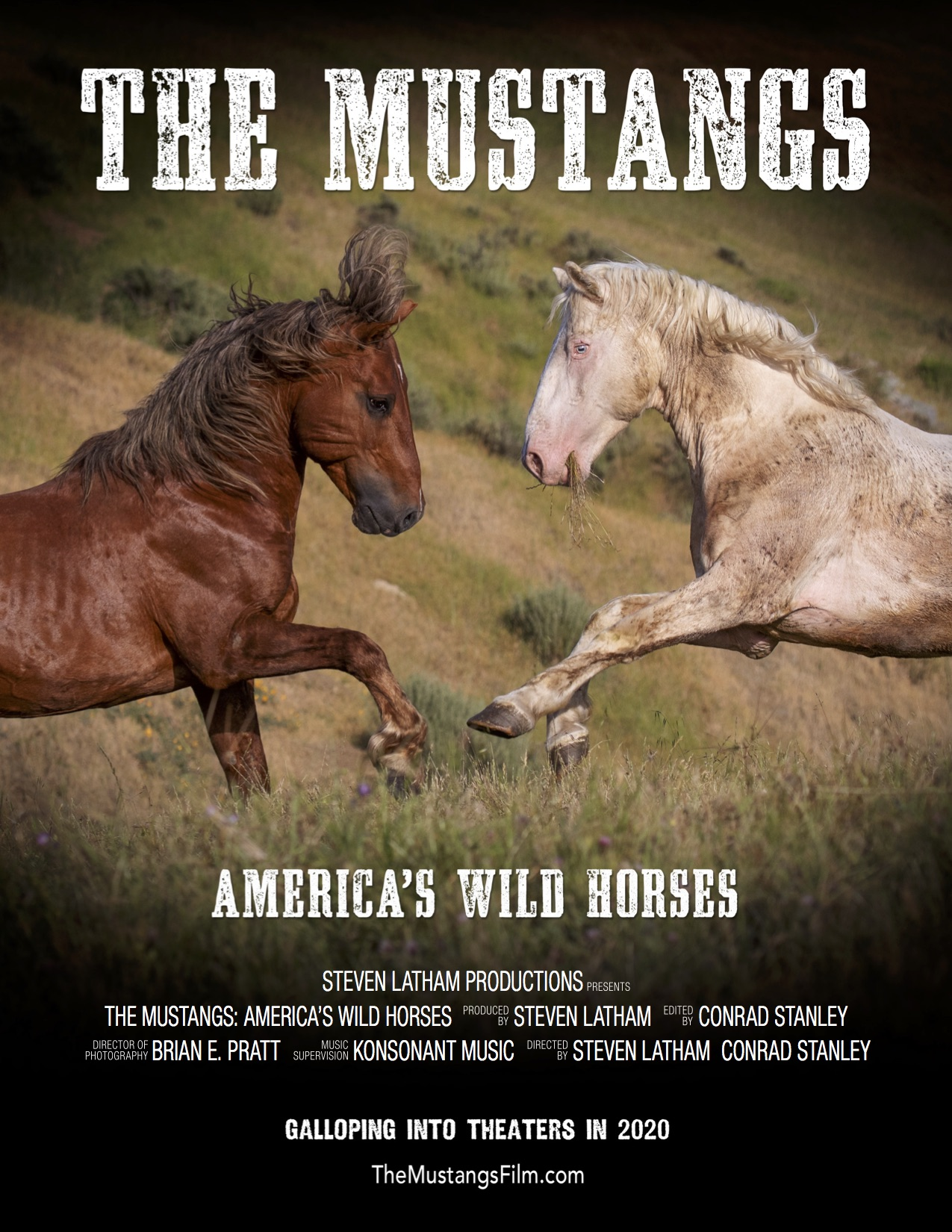 MUSTANGS 8.5x11 2 horse poster Feb12 150